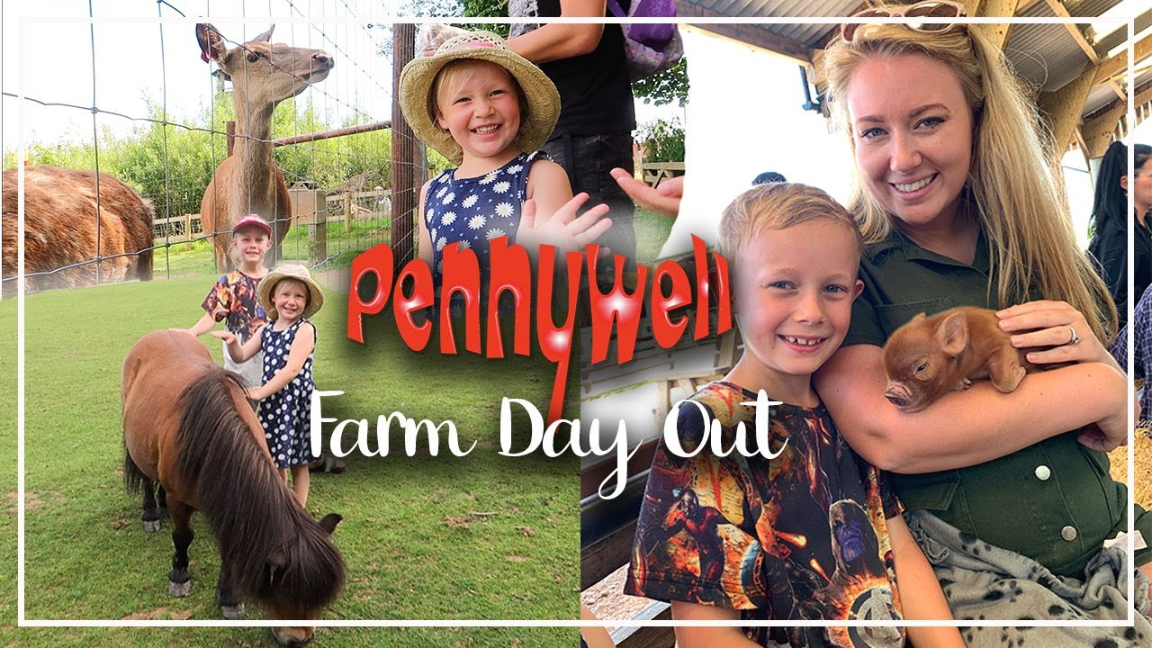 PENNYWELL FARM MINIATURE PIGS !! FAMILY DAYS OUT DEVON ATTRACTIONS - LOTTE ROACH